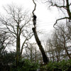 Are spiderlifts suitable for tree surgeons?